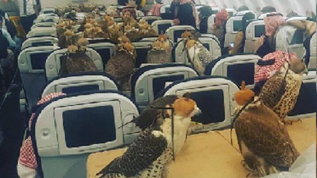 Саудовский принц купил билеты на самолет своим 80 соколам