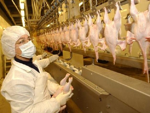 Куриное мясо в России опасно для жизни