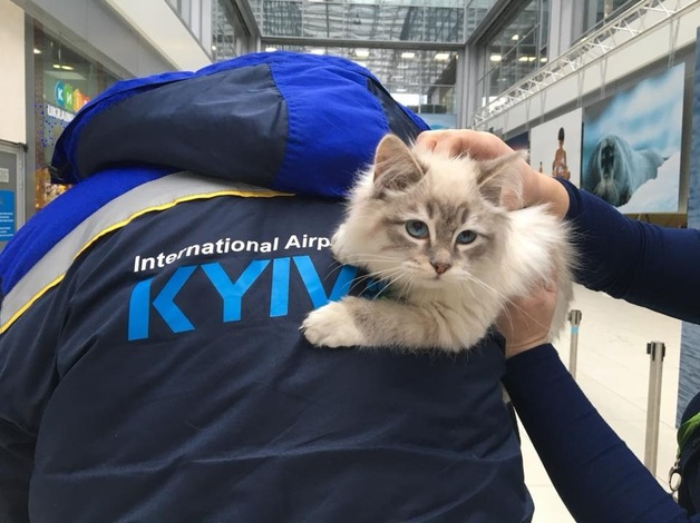 Пассажирка оставила котенка в киевском аэропорту, а сама улетела