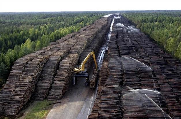 Руководство черновицких лесхозов проверяют по делу о растрате
