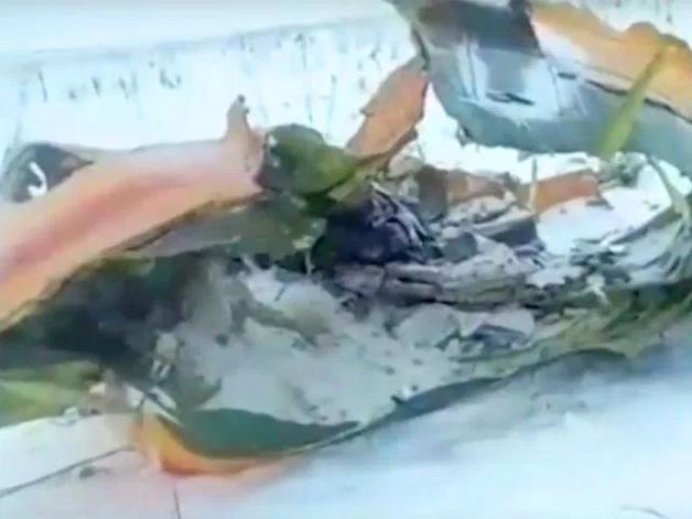 «У меня день рождения»: Чудом выживший пассажир АН-148