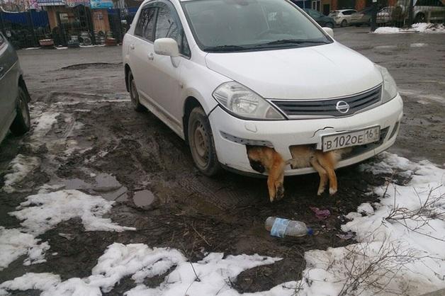 Депутат от «Единой России» несколько дней ездил с трупом собаки в бампере