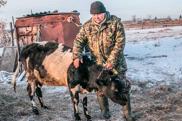 Прокурор извинился перед курганским фермером за дело о «теленке с GPS»