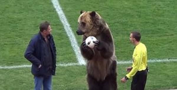 В России медведь открывал футбольный матч – защитники животных возмущены