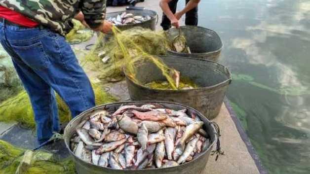 В Запорожье браконьеры наловили рыбы на 4 миллиона гривен