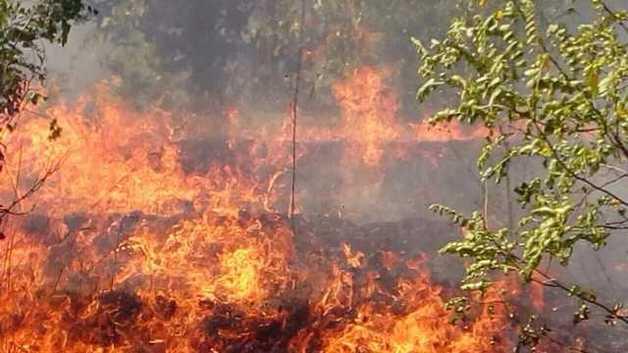 В Херсонской области начался масштабный лесной пожар