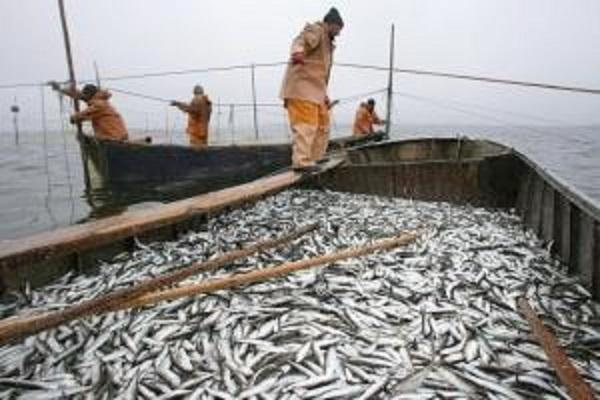 Глубокий рыбный раздор