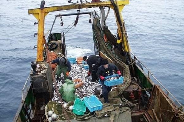 Что общего у Русской рыбопромышленной компании и контрабандистов из Южной Кореи?