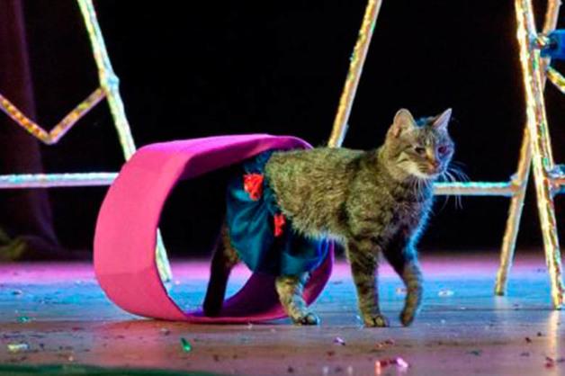 В благовещенскую «Котовасию», где исчезли 12 кошек, вернулись двое животных
