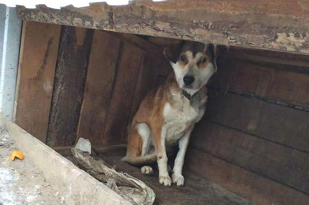 Уголовное дело возбудили в Приамурье, где в приюте нашли полсотни мертвых собак