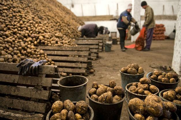 Из-за поставок гнилой картошки в Росгвардию в Чечне возбудили дело