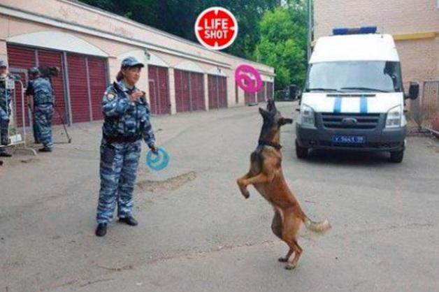 Военный прокурор, убивший служебную овчарку Ли, «смеется и предлагает щенка взамен»