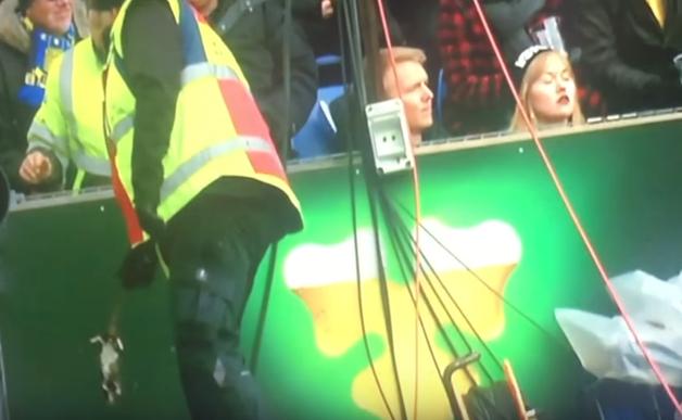 Безумие фанатов: в Дании игроков соперника болельщики забросали мертвыми крысами