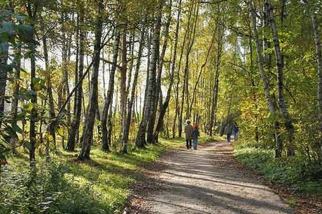 Труп мужчины с простреленной головой нашли у Бутовского лесопарка