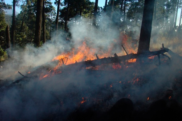 Алтайский депутат предложила бомбить горящую сибирскую тайгу