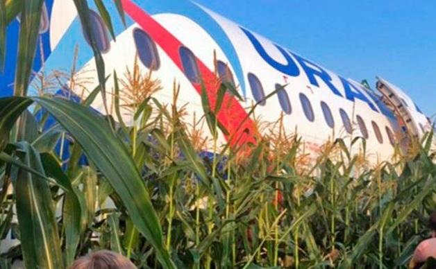 Опубликовано видео жесткой посадки самолета «Уральских авиалиний» в кукурузном поле
