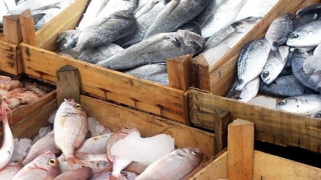"""Глеб Франк – """"и рыба, и мясо""""?"""
