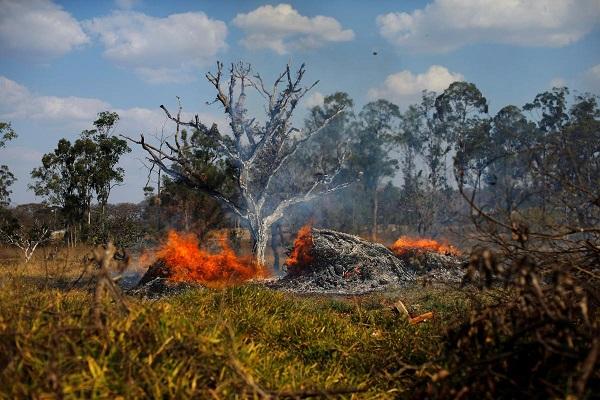 Леса Амазонки горят рекордными темпами: в Сан-Паулу дым от пожаров превратил день в ноч
