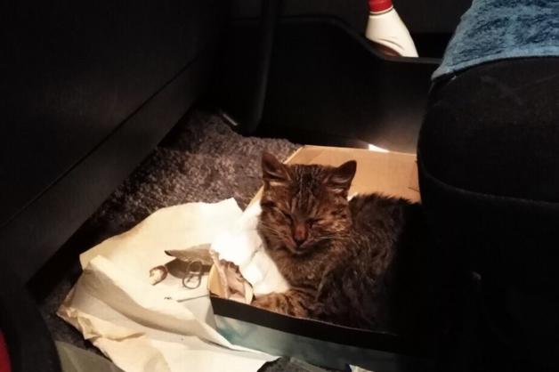 «Я начал его гладить, и у него слезы потекли»: саратовский дальнобойщик 17 часов вез умирающего котенка в Екатеринбург