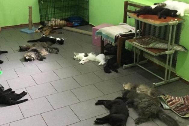 После массовой гибели кошек в оренбургском приюте возбуждено уголовное дело