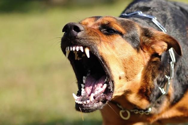 Псы бывшего криминального авторитета нападают на жителей Подмосковья