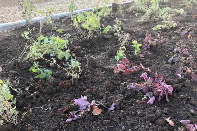 В Ростове Великом по контракту благоустройства в 10-градусный мороз высадили цветы