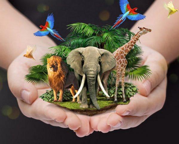 Картинки день животных для детей